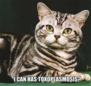 cat toxoplasmosis Toxoplasmosis – Can Your Cat Make You Sick?