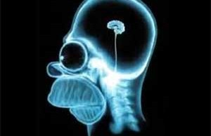 shrunken homer simpson brain humor