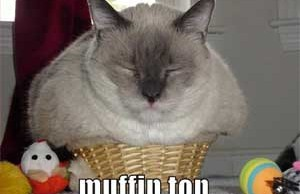 muffin top cat humor