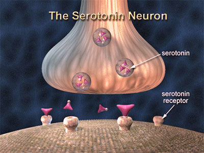 serotonin receptors How Do Psychiatric Medications Work?