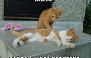 Headache Humor Cats lolz