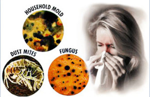 Home Allergens Causing Asthma