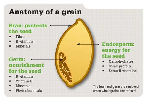 Anatomy of grain infographic