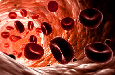 blood cells artery What Does the Annual Blood Test Check Up Involve?