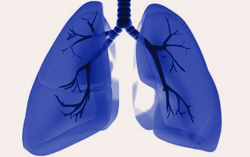 lungs 7 Tips to Improve Your Lung Function