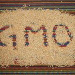GM Rice 150x150 Top 10 Cereals That Contain GMOs