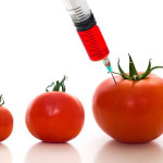 genetically modified tomatoes 150x150 Top 10 Cereals That Contain GMOs