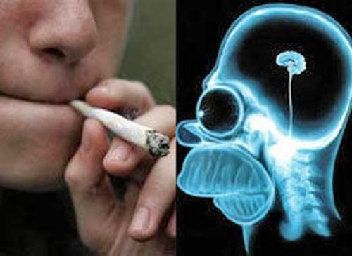 marijuana brain Marijuana's Effects on the Brain