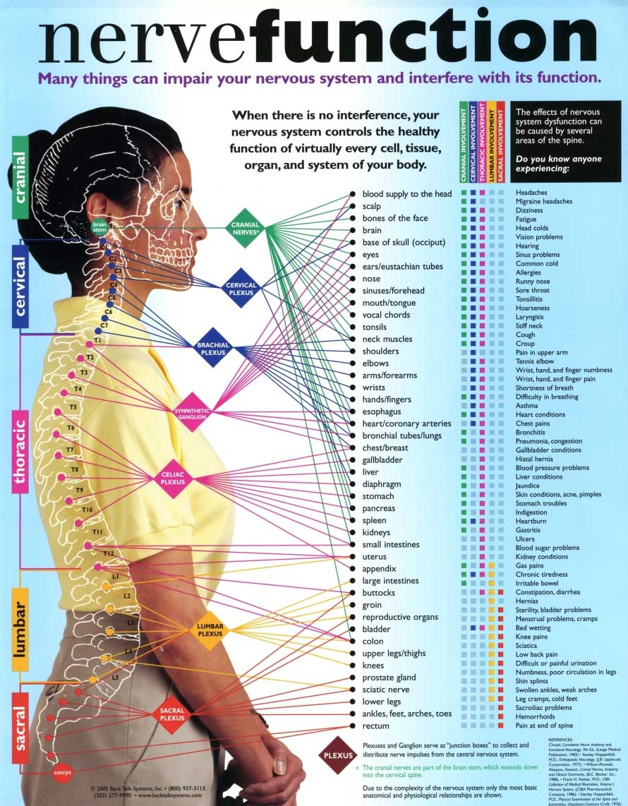 Nerve Function Vitamin Infographic