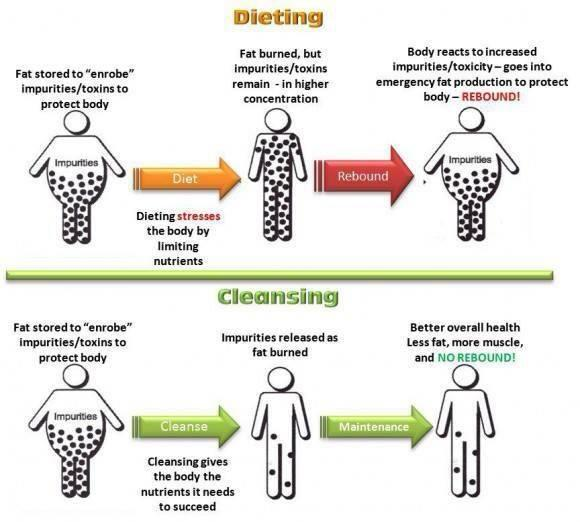 Todays Challenges For Crucial Aspects Of Weightlifting: How A Nutritional Body Detox Helps Promote Healthy Weight
